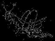 ilkka-heinäsirkka
